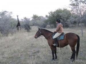 Amanda, a horse and giraffe